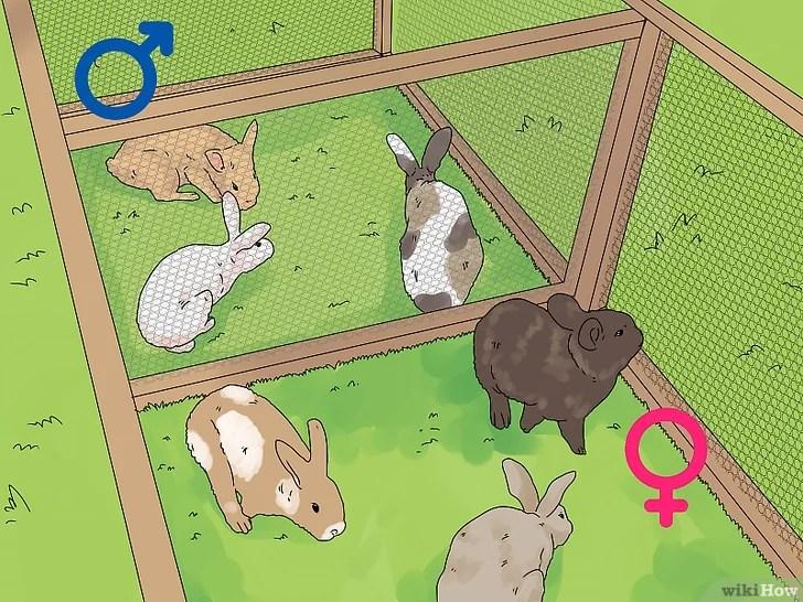 วิธีดูเพศกระต่ายขั้นตอนที่ 1