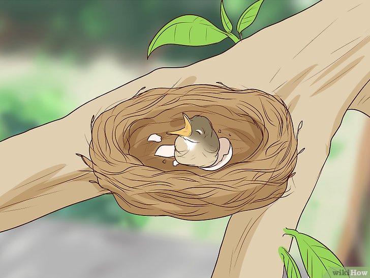 العناية بالطيور حديثة الولادة Wikihow