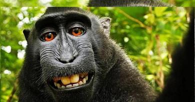 Monyet Selfi