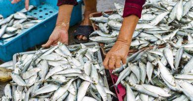 Ada Isu Ikan Sarden Mengandung Logam Beracun, Ini Penjelasan KKP