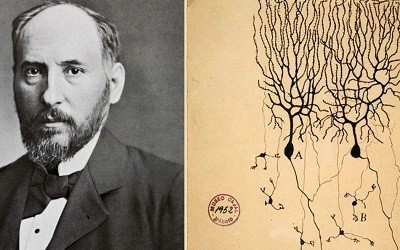Aportes Cientificos de Ramon y Cajal