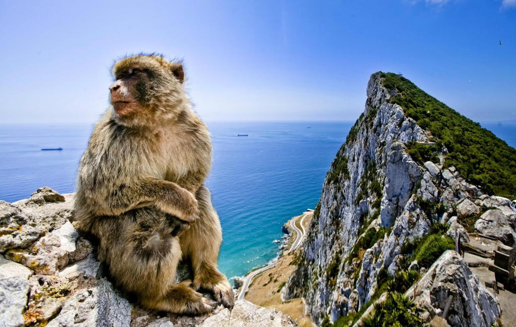 De Beroemde, Beruchte En Soms Brutale Apen Van Gibraltar