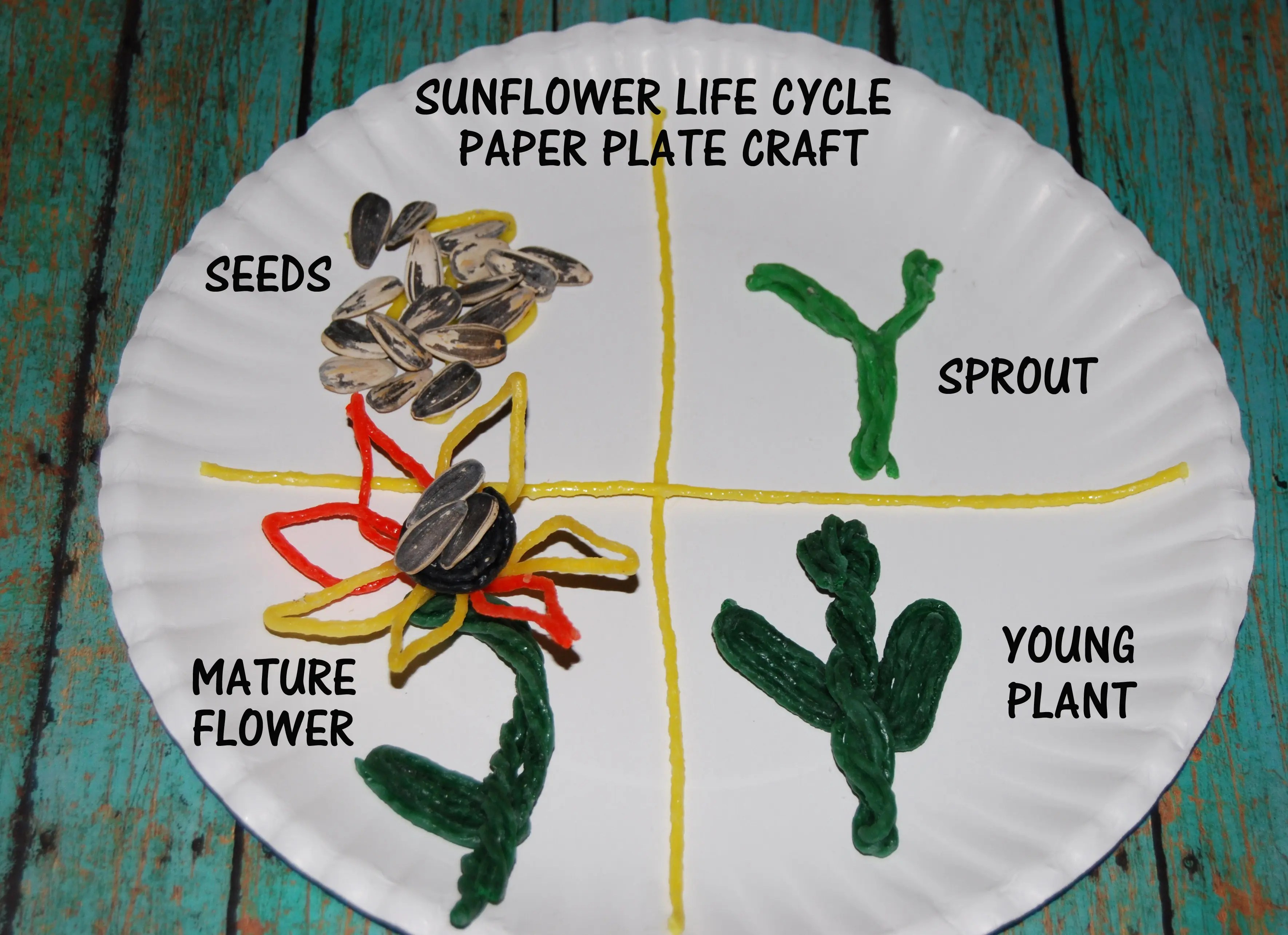 Wikki Stix Sunflower Life Cycle And Crafts For Kids
