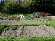 Parish Allotments 2015