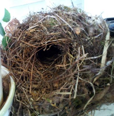 Visitors Share Stories About Wren Birds