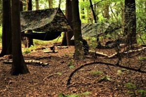 1 Day Woodland Survival & Bushcraft Course @ Merrist Wood College | Guildford | United Kingdom