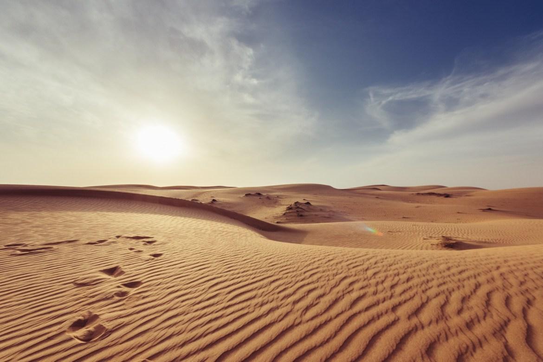 Desert Survival | Wild Survivor