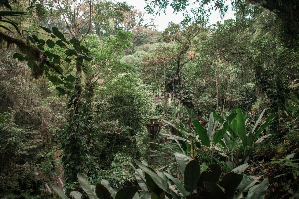 Las Pozas Xilitla Dschungel