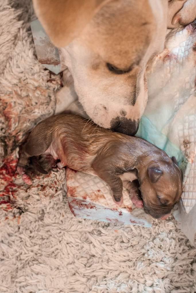 Auswandern Guatemala Hundegeburt