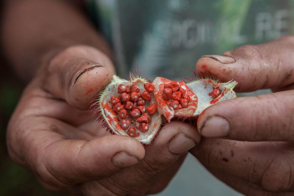 Früchte in Kuba