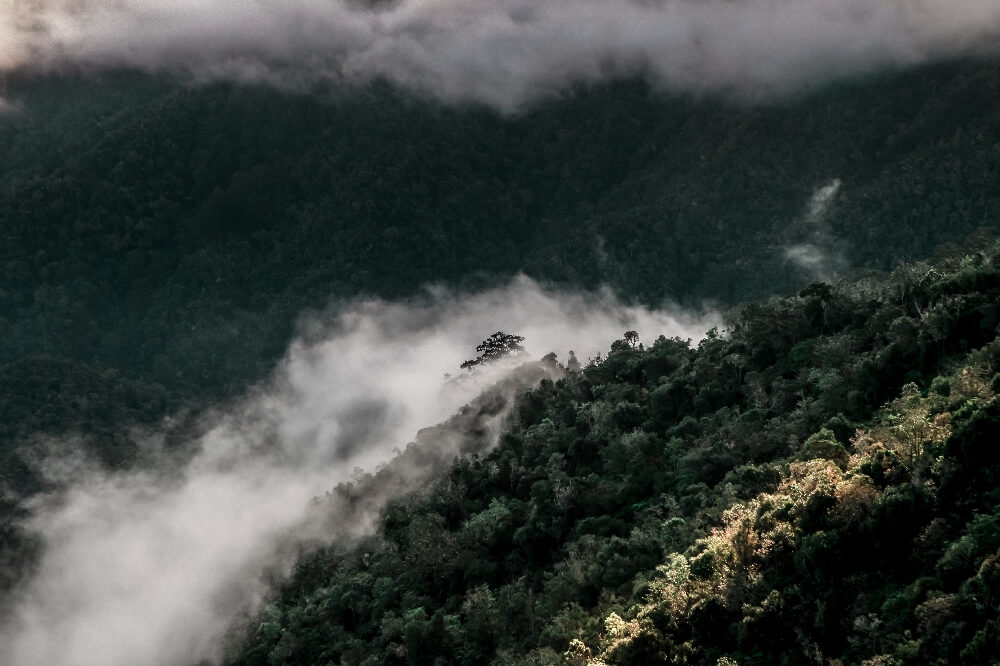 Pico Turquino Wanderung Nebelwälder
