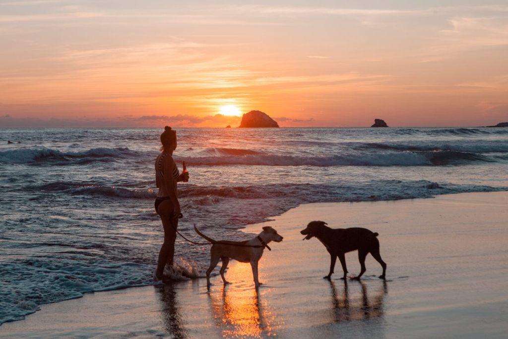 Einreise mit Hund nach Mexiko Sonnenuntergang