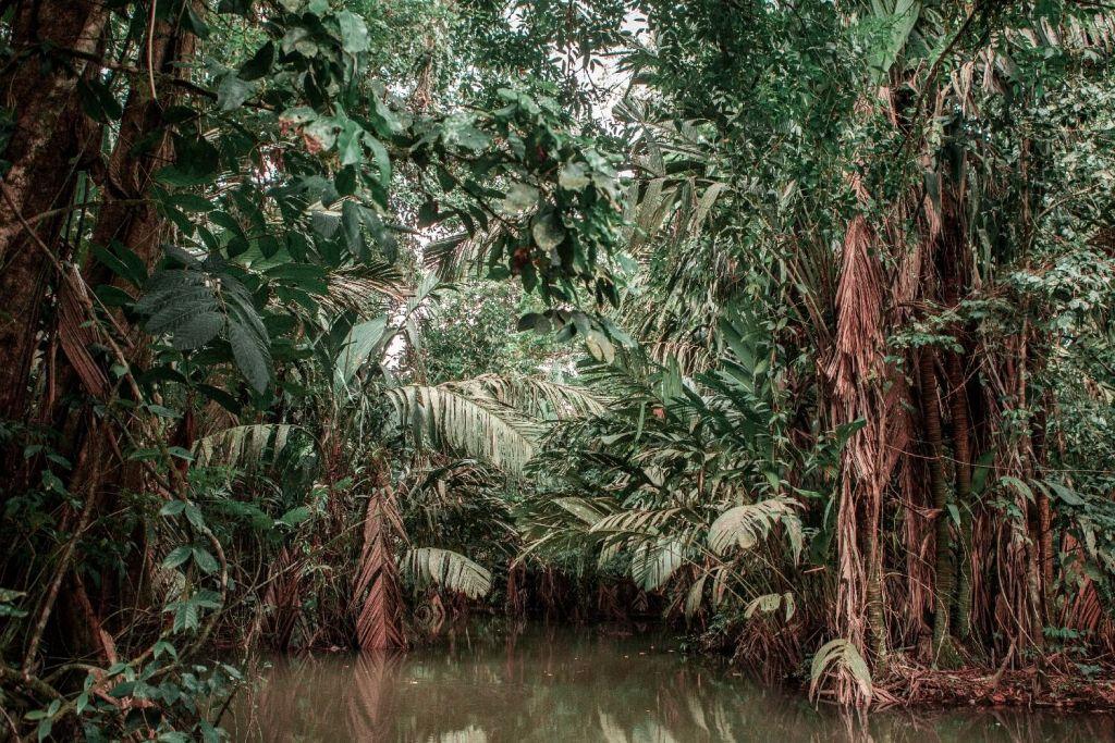 Karibikküste von Costa Rica Tortuguero Nationalpark