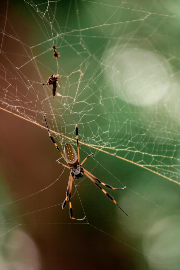 Spinne Nationalpark Manzanillo