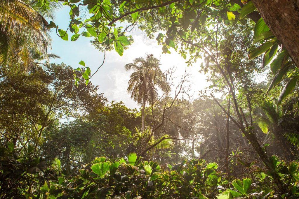 Karibikküste von Costa Rica Nationalpark Manzanillo Dschungel