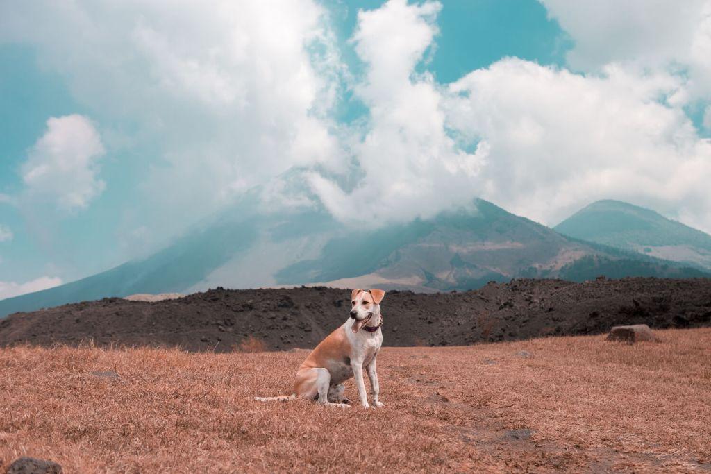 Guatemala Hund