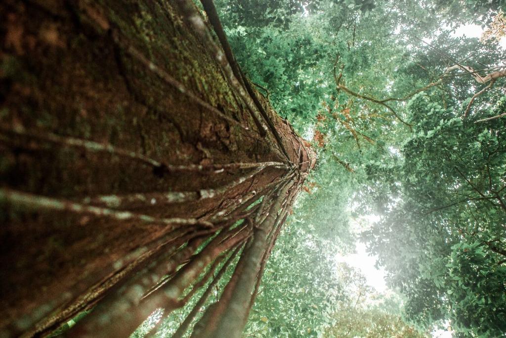 Baum im Nationalpark