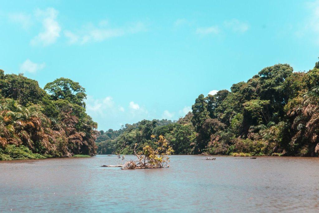 Tortuguero Nationalpark in Costa Rica Fluss