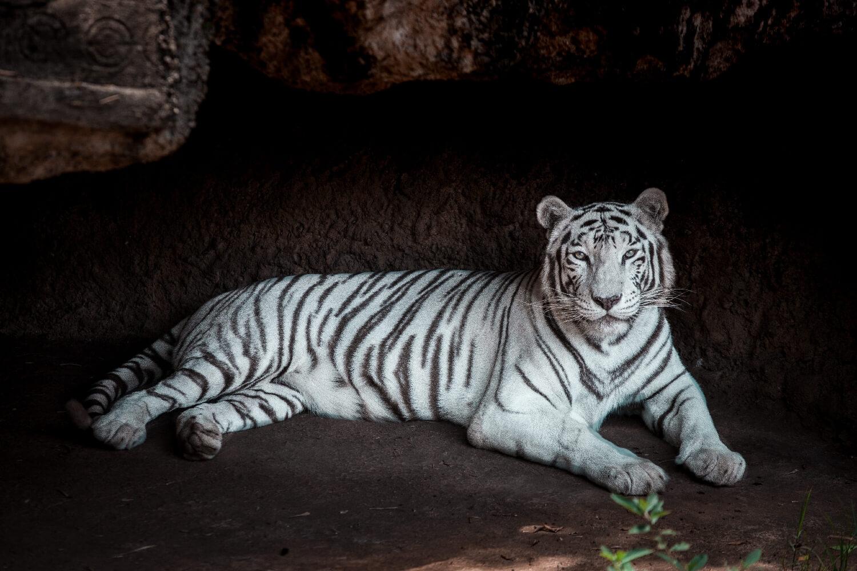 Titelbild La Aurora Zoo Guatemala City