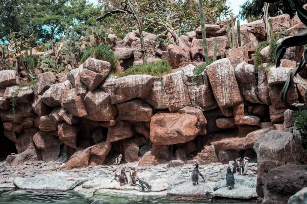 La Aurora Zoo in Guatemala City Pinguine