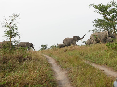 NATURE WILD ANIMALS AND TOURISM AN EXPERIENCE  TRAVEL WITH US