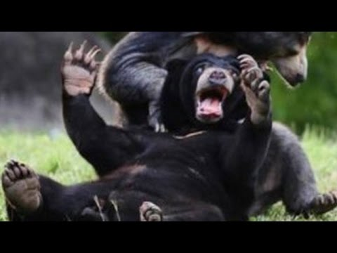 funny wild animals