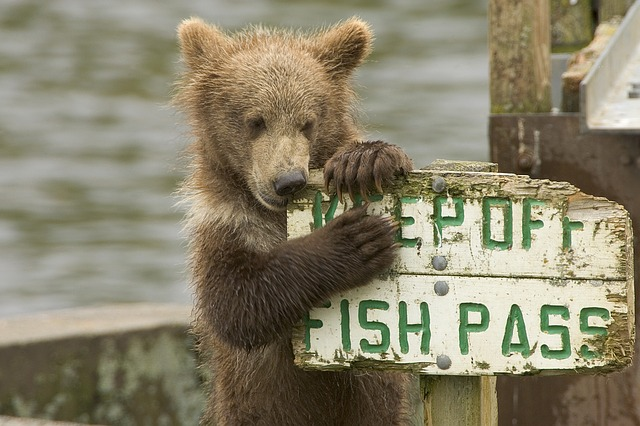 funny wildlife hilarious moments
