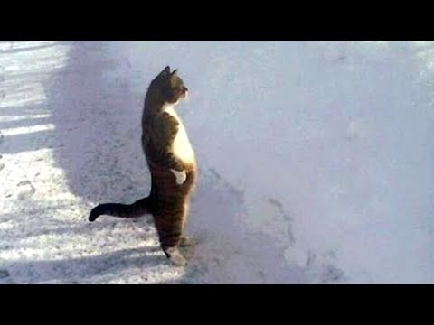 Youtube Funny Videos Animals