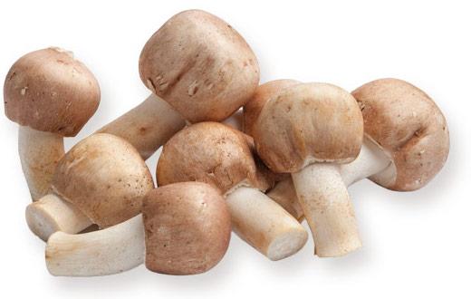 Royal Sun Agaricus mushroom