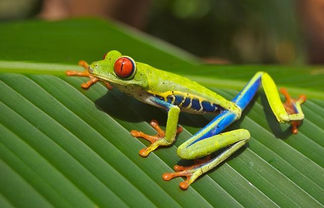 Zero Carbon Emissions Costa Rica