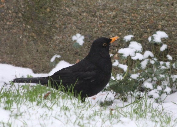 Blackbird2 - small