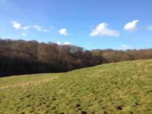 East edge of Epping Forest and farmland