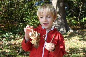 Learning about leaf galls