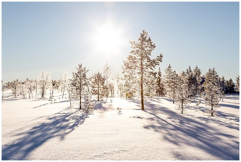 Lapland elopement inspiration with the golden light across the frozen forest by Wild Connections Photography