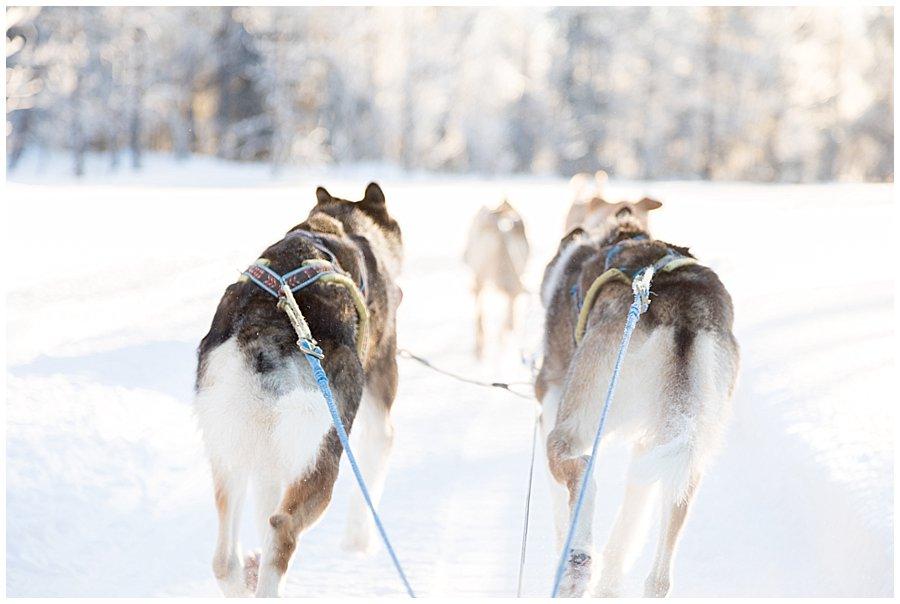 Wingrens Husky Safari Lapland