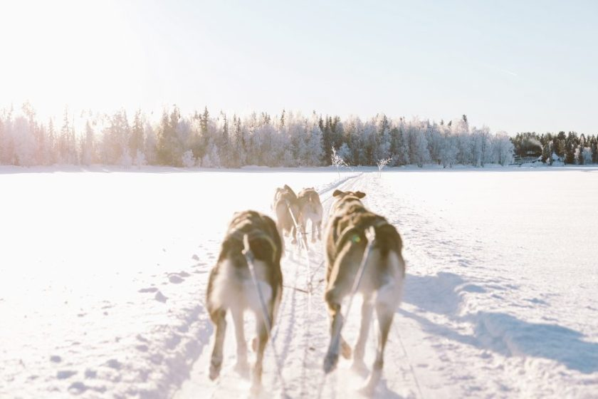 Dog Sledding in Lapland in Finland by Wild Connections Photography
