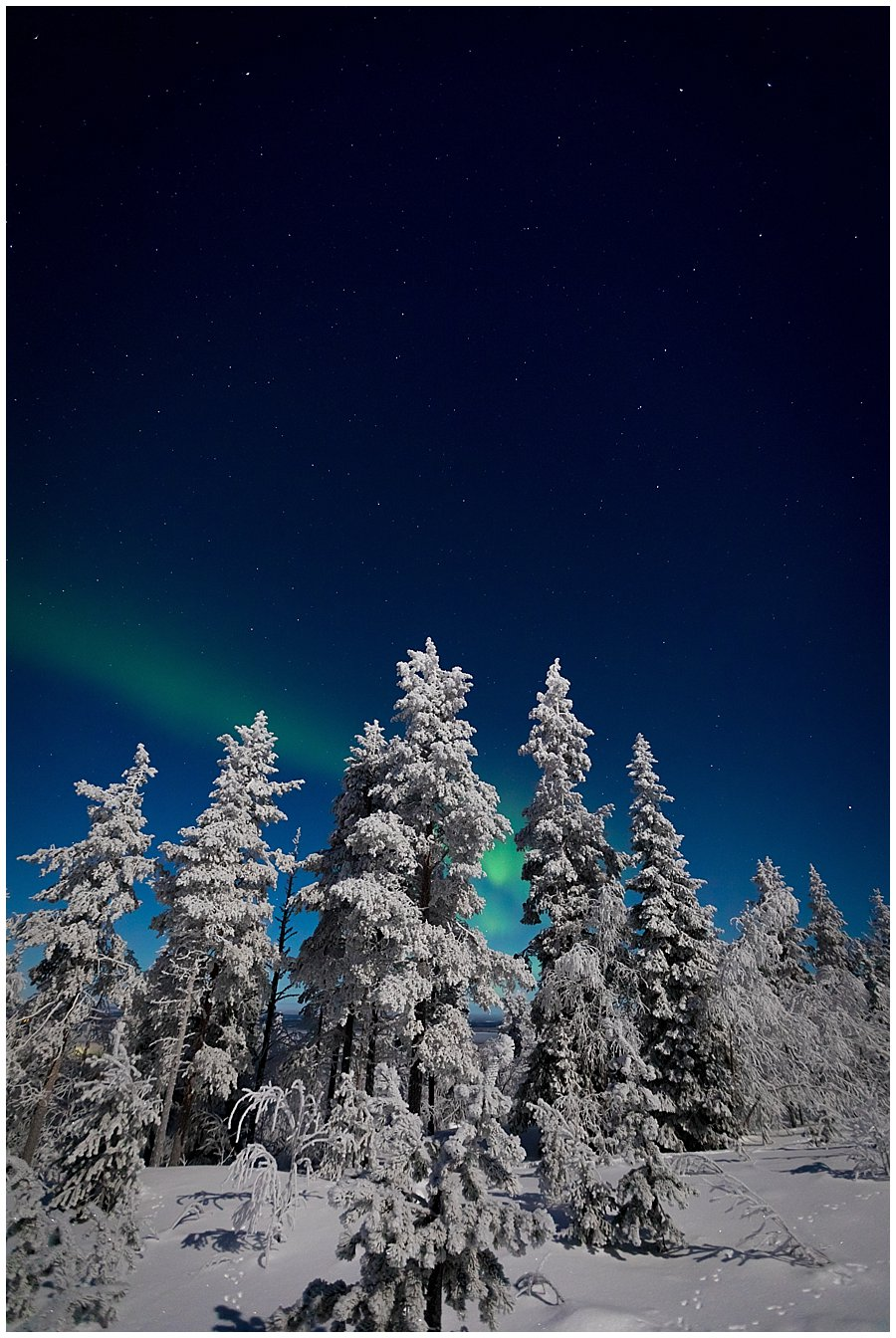 A single green band appears behind the trees in Levi Finland by Wild Connections Photography