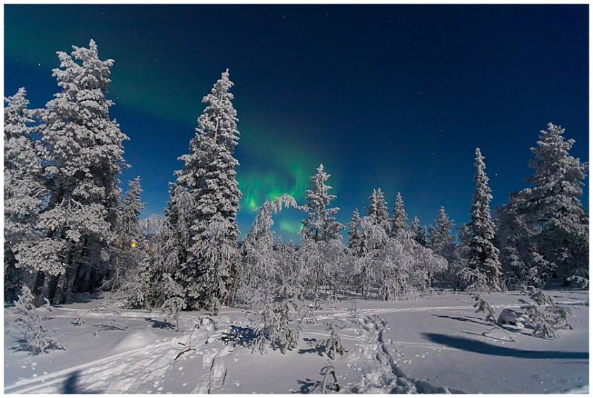 The aurora borealis create a green swirl behind the tall frozen trees in Levi Finland by Wild Connections Photography