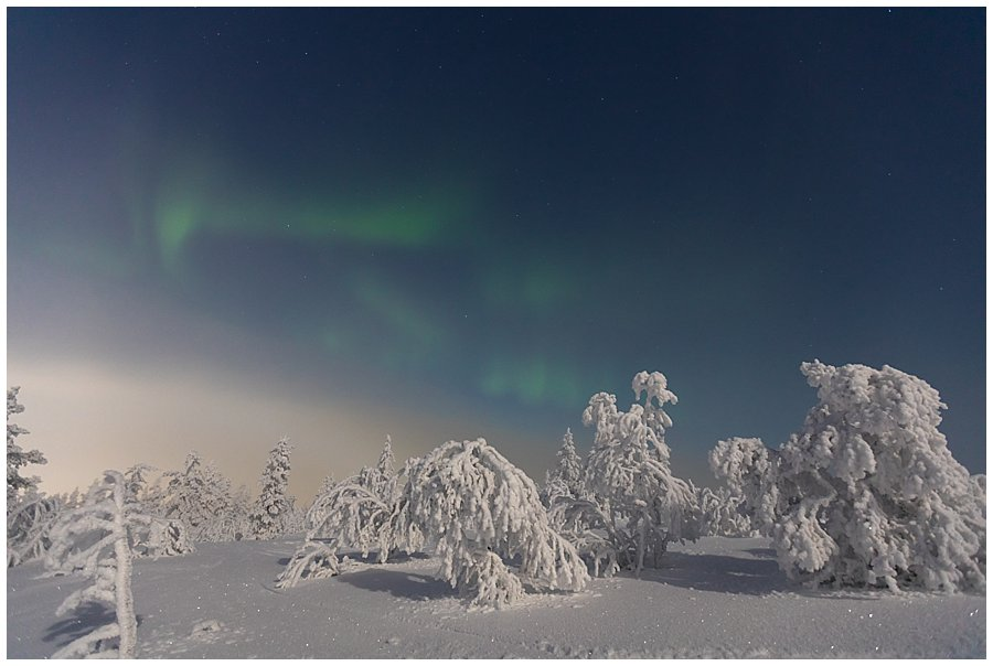 The northern lights grow weaker in the sky behind the frozen trees in Levi Finland by Wild Connections Photography
