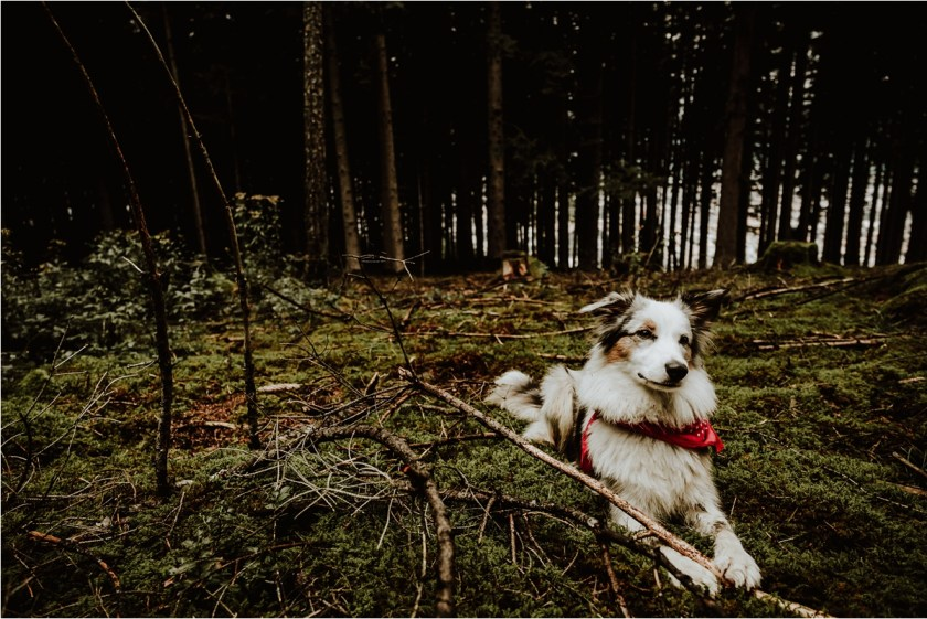Lucy sits on the forest floor by Wild Connections Photography