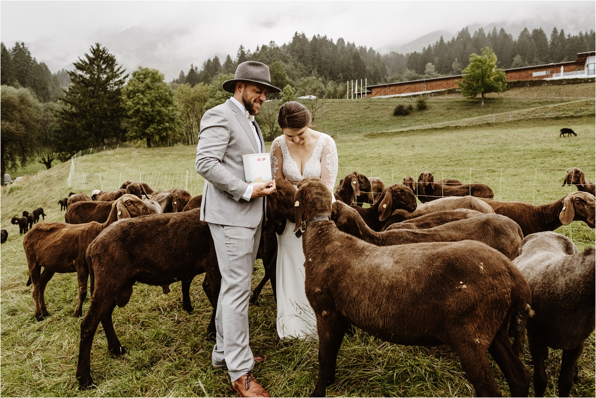 Bride and groom feed sheep on their wedding day. Photos by Wild Connections Photography