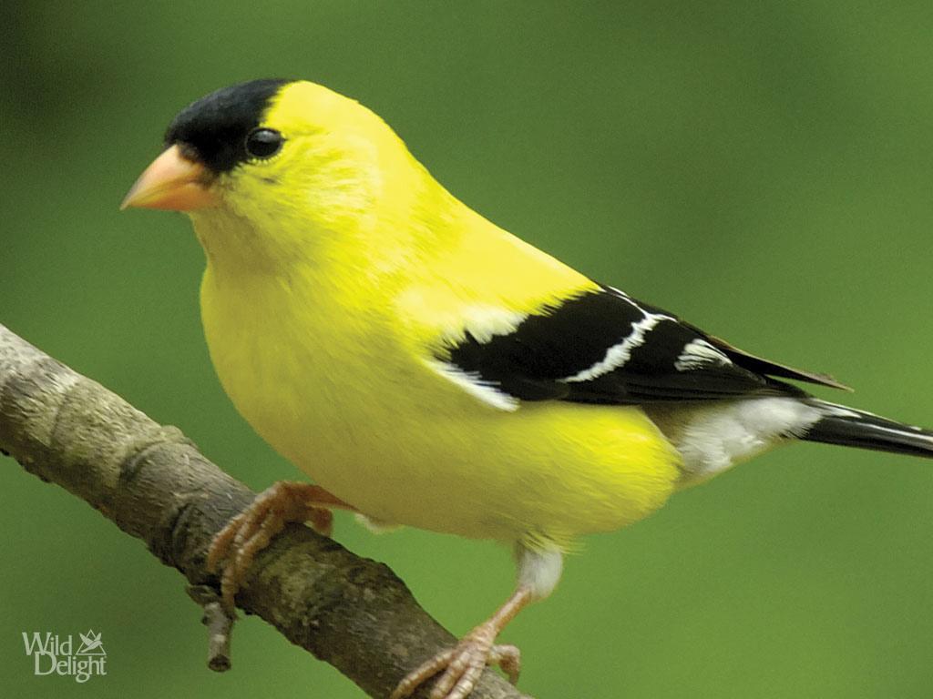 Goldfinch Quotes Quotesgram
