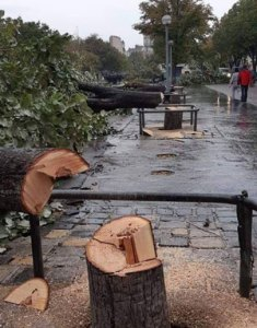 5G Tree Cutting