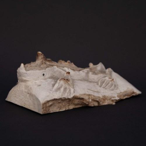 Max Laate Deer Antler Horned Lizard Carving