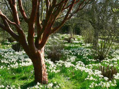 National-Trust-woodland-flowers