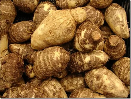"The rootstock or ""corns"" can be boiled and eaten like potatoes"