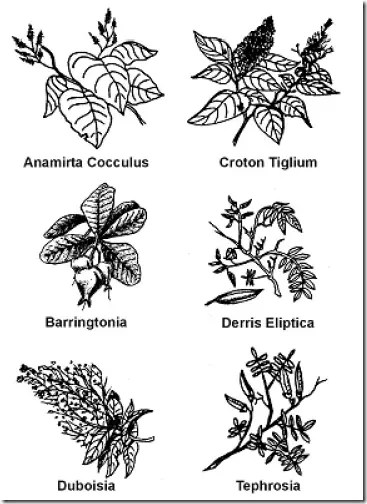 Plants for fish poison