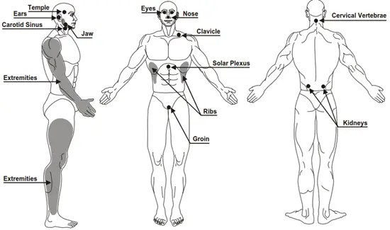 Target areas of the body