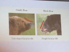 bear-dif-3