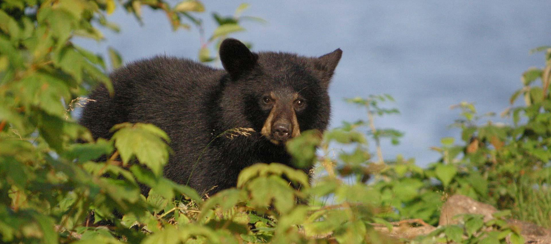 erringtons-nature-wildlife